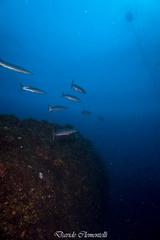 IMG_1320 (davide.clementelli) Tags: diving dive dives padi immersione immersioni ampportofino portofino liguria friends amici underwater underwaterlife sottacqua