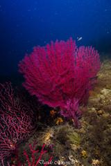 IMG_1311 (davide.clementelli) Tags: diving dive dives padi immersione immersioni ampportofino portofino liguria friends amici underwater underwaterlife sottacqua