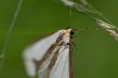 2018-09-24_10-18-12 (michaelstafford5) Tags: moth macro macronature macrodreams pasgl pentax tamronadaptall tamronsp60300macro tamronsp60300 tamron23a k5