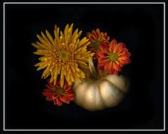 Fall arrangement (Deb Felmey) Tags: fall flower season colors flowers pumpkin
