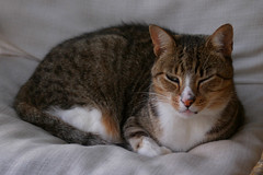 Home, Port Moresby, August 22nd 2005 (Southsea_Matt) Tags: august 2005 summer canon 10d papuanewguinea portmoresby home cat animal