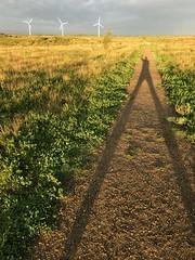 Hi! (Per Jensen) Tags: sunny leading lines shadow yellow hi greeting