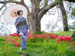 Cluster Amaryllis and Japanese Beauty (Cocoro) (HarQ Photography) Tags: zhongyioptics speedmaster65mmf14 fujifilm fujifilmxseries gfx50s japan beauty portrait conceptual autumn redspyderlilly clusteramaryllis lakeside shiga kimono
