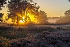 _IMG2348 (2) (Henk de Regt) Tags: the netherlands gelderland natuur nature landscape grass bos forest trees zonsopkomst sunset sundown zonsondergang swamp nederland veluwe landschap gras water bomen moeras