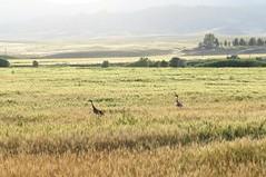 Butte, Montana (lotosleo) Tags: butte montana mt landscape outdoor crossamerica2015 birds