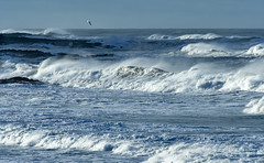 Yachats (acase1968) Tags: yachats oregon coast pacific ocean nikon d500 nikkor 70300mm bird seagull waves water surf breaking blue