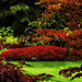 Garden Reds