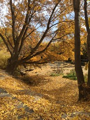 IMG_2808 (August Benjamin) Tags: provo provoriver provorivertrail fall utah mountains provocanyon fallcolors autumn trees leaves orem utahvalley jogging