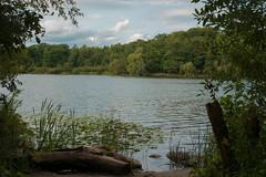 Fishing Rod Needed (Arijit_Roy) Tags: fishing heartlake brampton toronto arigraphy arijit roy wood nature water lake