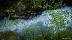 The Rogue Gorge (Nick Kanta) Tags: color d90 nikon oregon outdoorphotography river rogueriver tamron1750 trees