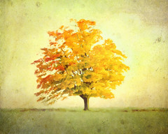 a tree In autumn (Hal Halli....happy everything!!) Tags: tree autumn fall seasons homedecorart wallart nature