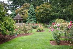 260/365 rose garden