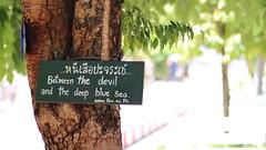 Chiang Mai, Thailand (csl3228) Tags: girlphotographer girltraveller photography thailand chiangmai travel