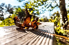 Grooves (iron_fer) Tags: fall leaf dry red colours bokeh bench nature