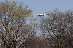 A SMALL AIRPORT, SOME PARKS AND CLOUDS - CLXXVI (Jussi Salmiakkinen (JUNJI SUDA)) Tags: chofu tokyo tokio japan japani cityscape park airport sky aircraft wood airplane landscape tama 調布 飛行場 空港 林 森 空 武蔵野 多摩 東京 日本 風景 clouds spring 2018 kevät maaliskuu flower cherryblossoms dianond da42 diamondda42 diesel dieselengine landing tree