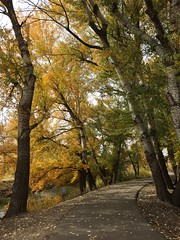 IMG_2806 (August Benjamin) Tags: provo provoriver provorivertrail fall utah mountains provocanyon fallcolors autumn trees leaves orem utahvalley jogging