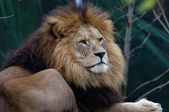 IMG_6450_DxO (borisgrohmann) Tags: tamron150600g2 animalpark zoo munich bavaria bayern