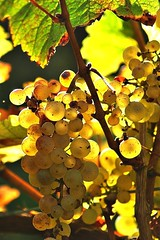 Grappe de raisin (mamietherese1) Tags: world100f macrodreams ngc earthmarvels50earthfaves naturethroughthelens
