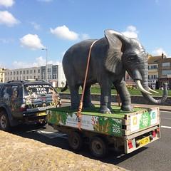 An elephant in a trailer (Katie-Rose) Tags: elephant van trailer advertising noahsartzoofarm 29atthezoo 52in2018challenge