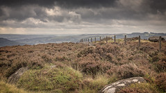 Peak heather (seth2252013) Tags: peakdistrict derbyshire nationalpark heather heathland moorland vista
