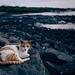 2018, Mumbai, India, beach cat ;)