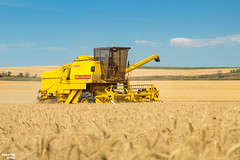 Summer Memories | NEW HOLLAND (martin_king.photo) Tags: harvest harvest2018 ernte 2018harvestseason combineharvester combine harvester new modernmachine summerwork powerfull martin king photo machines strong agricultural great czechrepublic agriculturalmachinery farm working modernagriculture landwirtschaft martinkingphoto moisson machine machinery field huge big sky agriculture power dynastyphotography lukaskralphotocz day fans work place yellow gold golden eos country lens rural camera outdoors outdoor goldenhour colours fields lines claaslexion southmoravia claas clouds cloudyday bluesky