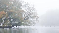IMG_3347 (Calabrones) Tags: deutschland oberbayern bayern schlossparknymphenburg münchen herbst morgen nebel morgennebel bäume herbstlaub wasser see mignonbergeroswald