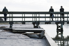 Nakskov seal (' A r t ') Tags: seal jetty people spectators beach gray sunny relaxing sand water animal sea