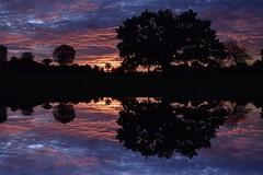 Auf Rindersuche im Morgengrauen; Bergenhusen, Stapelholm (7) (Chironius) Tags: stapelholm bergenhusen schleswigholstein deutschland germany allemagne alemania germania германия niemcy morgendämmerung sonnenaufgang morgengrauen утро morgen morning dawn sunrise matin aube mattina alba ochtend dageraad zonsopgang рассвет восходсолнца amanecer morgens dämmerung himmel sky ciel cielo hemel небо gökyüzü wolken clouds wolke nube nuvole nuage облака spiegelung отражение reflexión yansıma baumsilhouette