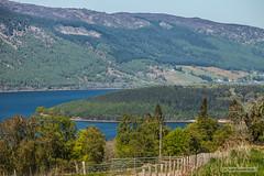 "View from above Dores across Tor Point to Lairgmore and Lochend. (Scotland by NJC.) Tags: scotland lochness highlands forest woodland plantation trees grove ""temperate rainforest"" غَابَة floresta 森林 šuma les skov bos ""bosque grande"" metsä forêt wald δάσοσ foresta skog las pădure lakes lochs reservoirs waters meres tarns ponds pool lagoon lago 湖 jezero sø meer järvi lac see λίμνη 호수 innsjø jezioro озеро shoreline sand shingle pebbles شاطِئ praia 海滩 plaža pláž strand playa hiekkaranta plage παραλία spiaggia 浜辺 바닷가 plajă"
