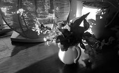 Domestic moments (YAZMDG (16,000 images)) Tags: blackandwhite monochrome monochromatic bw noiretblanc nb floraldisplay