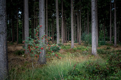Bos (Gerrit Veldman) Tags: boswachterijhooghalen drenthe dutch holland hooghalen middendrenthe nederland netherlands bos forest bomen trees natuur nature olympus epl7