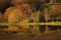 _SAM0100 (magneroed) Tags: autumn haust høst colours farger water tjern tjørn vatn rimbareid fitjar rimbareidtjørna norway trees trær reflection speiling