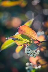 Lumières et couleurs d'automne (Des.Nam) Tags: couleur color contrejour contraste desnam nikon nikond800 d800 nature automne automnal bokey flore