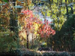 Le reflet de l'automne (Hélène Quintaine) Tags: reflet arbre automne eau bassin nature extrieur gittonville saclas essonne france octobre impressionnisme