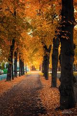 Autumn street (Joni Salama) Tags: syksy helsinki munkkiniemi suomi keltainen uusimaa finland fi autumn fall yellow
