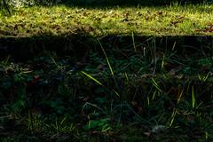 (Tom McE) Tags: suffolk grass highlight light green steps