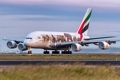A6-EOM Emirates Airbus A380-861 34L Sydney Airport SYD/YSSY 28/12/2017 (TonyJ86) Tags: a6eom emirates ekuae airbus a380 a388 a380800 a380861 widebody quadjet aircraft aviation airliner airplane aeroplane plane passenger jet jetliner jetaircraft jetplane passengerplane passengerjet international departure takeoff rotate flight fly airport syd yssy sydneyairport sydneykingsfordsmith sydney nsw newsouthwales australia planespotting avporn aviationporn avgeek travel nikon d750 nikond750 vehicle outdoor aviationphotography nikkor70200mmf28vrii speciallivery unitedforwildlife wildlife condensation fog animals purplesky superjumbo