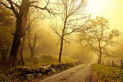 Una giornata di nebbia..... (Marco Allegro) Tags: