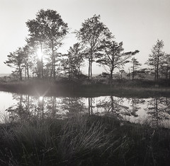 Sunrise (Tomas Ruginis) Tags: landscape bog trees sunrise lake nature bronicasq 66 medium format film ilford panf 50 kodak epson600 summer lithuania lietuva bw