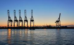 Kräne (Körnchen59) Tags: kräne cranes hamburg hafen port harbor reflection wasser water körnchen59 elke körner sony alpha6000 sonnenuntergang sunset