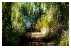 Vers l'automne (Briren22) Tags: chemin ombres arbres feuillage automne icm mouvement peinture impression