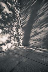 eastern corner (p_v a l d i v i e s o) Tags: textures shadows tree corner splittoning canoneos5dmarkiii angle monochrome ef1635mmf28ii 1635mm 5d3 canon5d canon5dmk3 canonef1635mmliiusm bw blackandwhite monocromatico monocromatique monocromático lisboa amlisboa portugal pt
