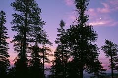 north rim (phatwhistle) Tags: sunset trees grandcanyon moon sky nature canonft