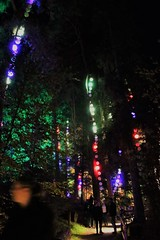 2018 - 4.10.18 Enchanted Forest (129) (marie137) Tags: forest lights trees show marie137 bright colourful pitlochry treeman attraction visit entertainment music outdoors sculptures wicker food drink family people water animation