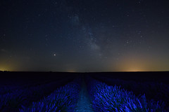 La Vía Láctea sobre los campos de lavanda (Hachimaki123) Tags: paisaje landscape brihuega lavanda lavender víaláctea lavíaláctea milkyway themilkyway marte mars