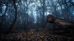 Foggy Forest (Thomas TRENZ) Tags: austria autumn cold herbst kalt nebel thomastrenz wald bäume foggy forest mystery mystic natur nature trees ultra weitwinkel wideangel österreich