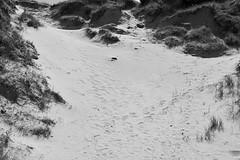 Zuydkote, France (bm^) Tags: dune nature zuidkote lenord frankrijk zuydkote france bw black white zwartwit boom tree nikon d700 nikond700 zeiss planar5014zf duin dunes duinen wolk cloud zuydcoote