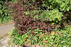 DSC_1884 (PeaTJay) Tags: nikond750 reading lowerearley berkshire gardens outdoors nature flora fauna plants flowers trees shrubs bushes foliage