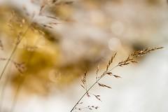 Gebogen (thomaslanghanki) Tags: gras wasserfall